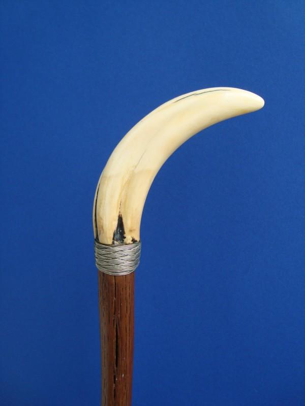 A warthog teeth